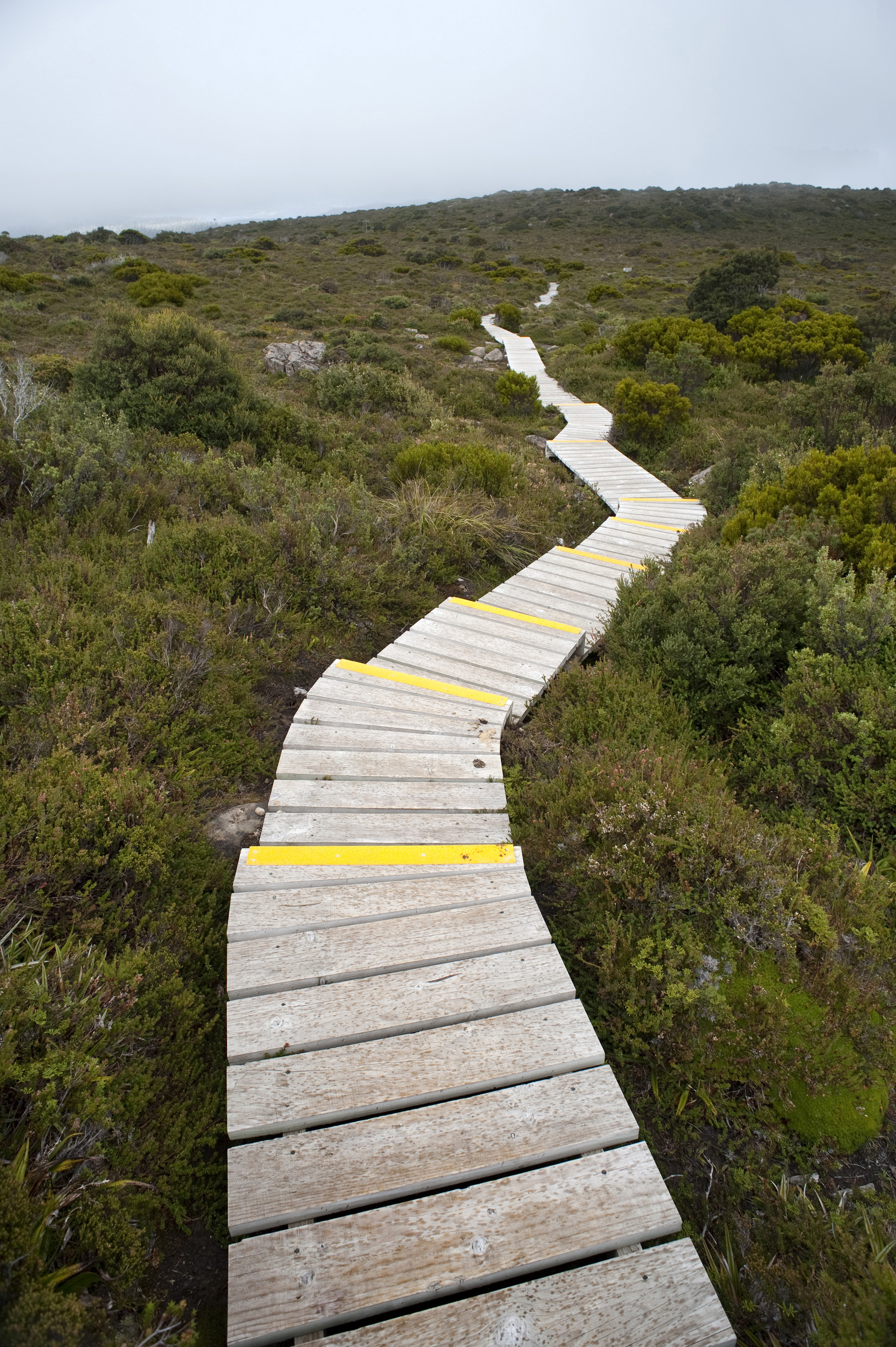 Highland trail with an empty narrow wooden boardwalk meandering across the hilltop into the distance amongst low shrubs of alpine vegetation