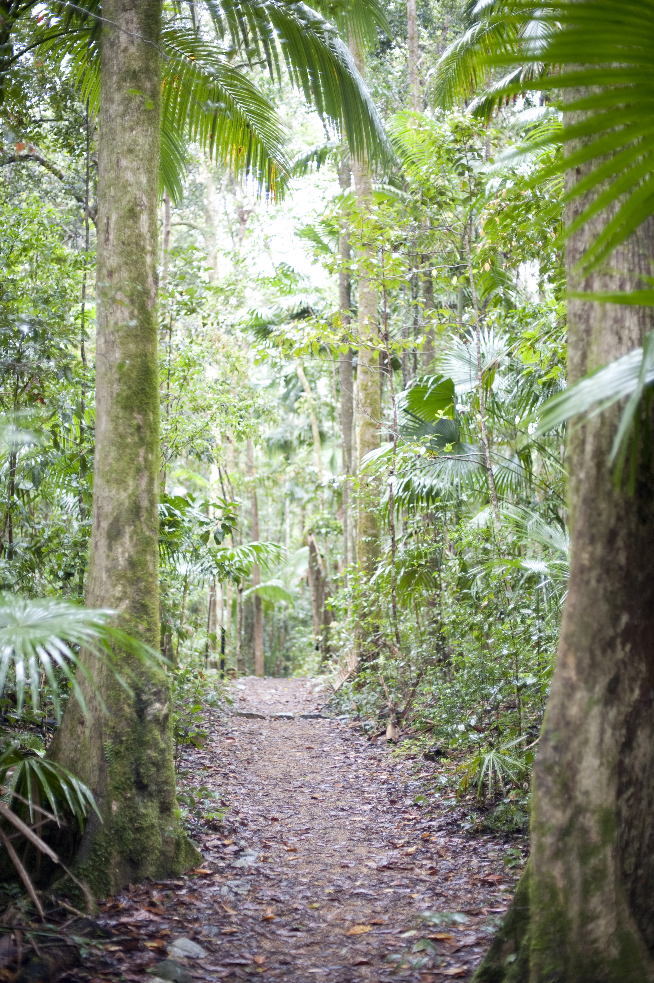 Deserted rainforest path leading between beautiful lush green tropical vegetation and palm trees